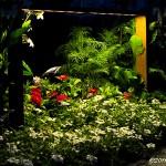 Blommor i natten