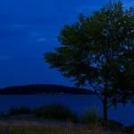 Trädet på piren