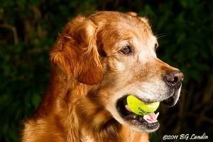 Skall vi spela tennis?