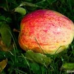 Höstfrukt