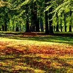 Nolhaga park i höstskrud