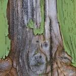 Nästan trärent
