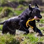 Nya bilder i fotogalleriet Hundbilder