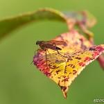 Insekt på färgglatt blad