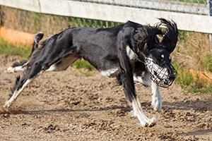 Speedy Dogs träning på Mariedal 130709