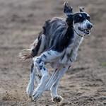 Speedy Dogs träning på Mariedal 130716
