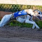 Speedy Dogs träning på Mariedal 130827