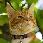Nya bilder i djur och natur 130810