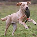 Nya bilder i Hundbilder 150317