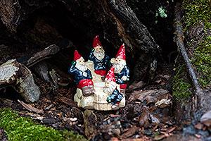 Tomtesafari i Nygårds park